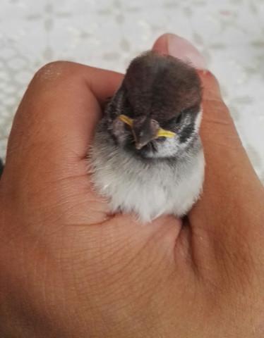 Vogel1 - (Tiere, Biologie, Vögel)