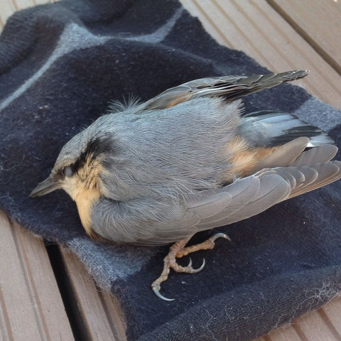 So sieht das Kleine aus - (Vögel, vogelbaby)