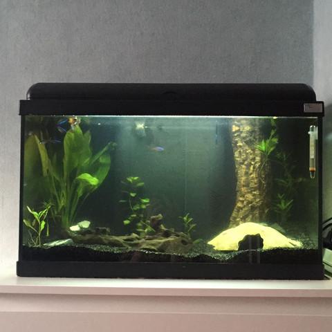 Viele Fragen zum Süßwasseraquarium?