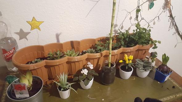 Viele Pflanzen im Schlafzimmer?sauerstoff? (Biologie)