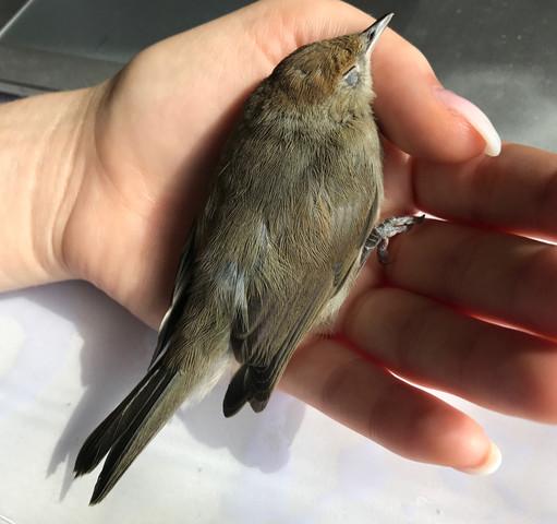 Vogel - (Vögel, Wildvögel)
