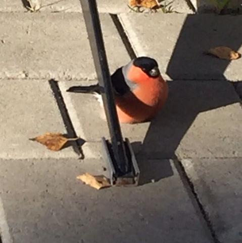 Hier ein Bild des Vogels. - (Vögel, finden, verletzt)