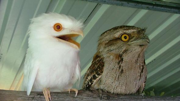 Die gesuchten Vögel - (Freizeit, Vögel, Ornithologie)