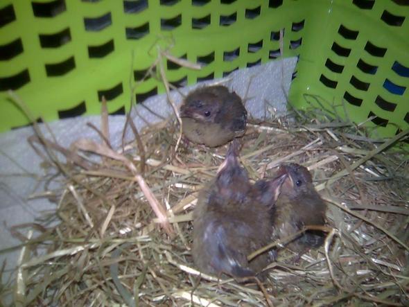 vogelbabys gefunden welche sind es v gel finden. Black Bedroom Furniture Sets. Home Design Ideas