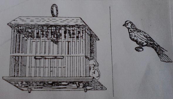 Käfig-Strich-Vogel - (Augen, Illusion, optische Täuschung)