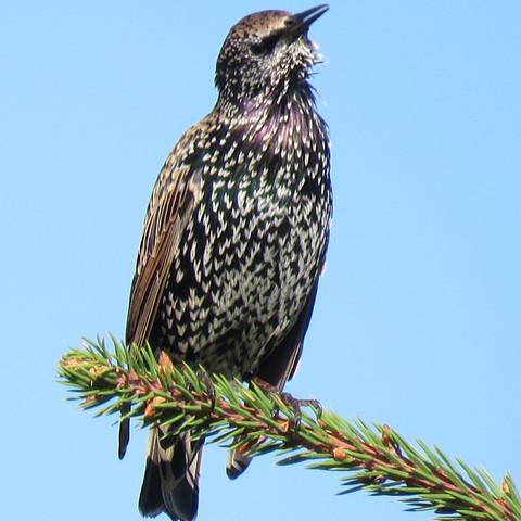 Prächtig Vogelkunde. Wer kann diesen Vogel bestimmen? (Garten, Vögel @OP_22