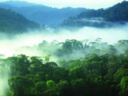 So schön ist der Regenwald! - (Tiere, Natur, Vortrag)