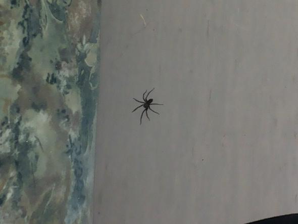 Das ist die Spinne - (Gesundheit, Medizin, Tiere)
