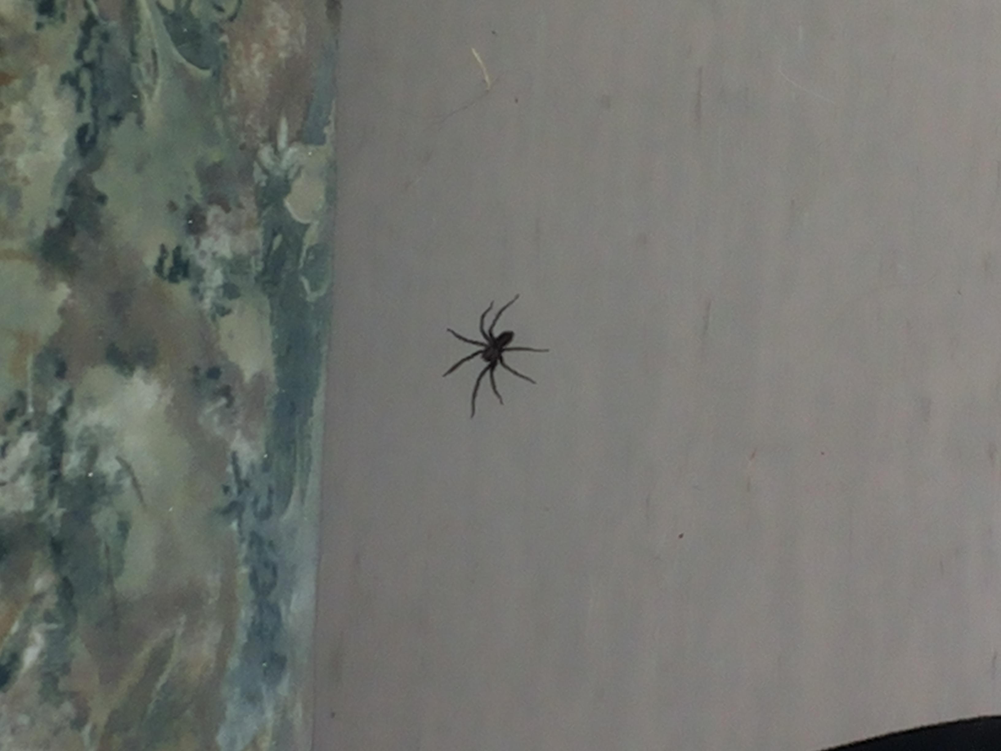 Von Spinne Gebissen