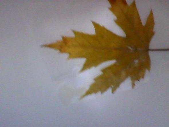 das blatt - (Biologie, Baum, Wald)