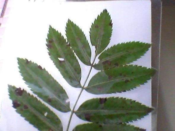 dieses blatt - (Biologie, Baum, Wald)