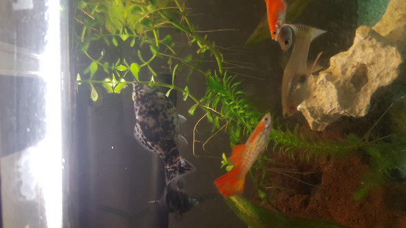 - (Tiere, Fische, Aquarium)