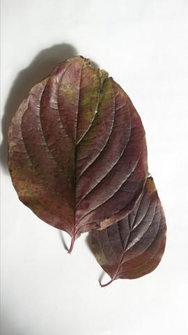 2. - (Natur, Blätter bestimmen)