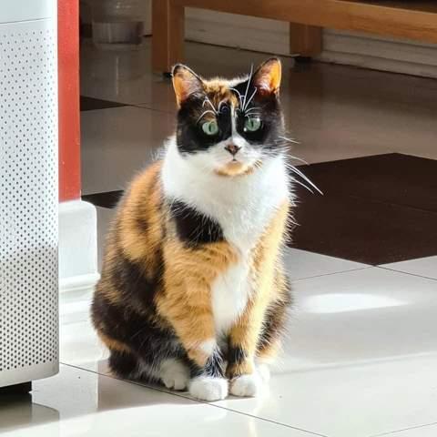 Von welcher Rasse ist die Katze von Slivkishow(Kuki)?