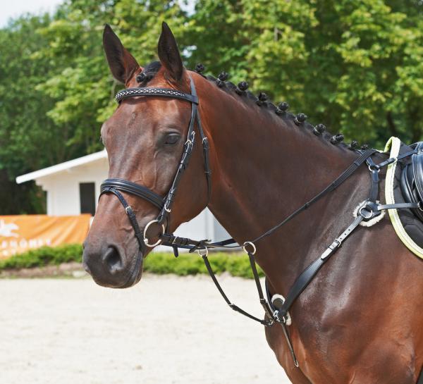 vorderzeug richtig verschnallen pferde reiten springen. Black Bedroom Furniture Sets. Home Design Ideas