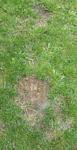 Was sind das für Löcher im Rasen?