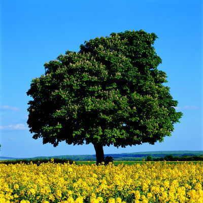 Wachsen Bäume von Innen oder von Außen?