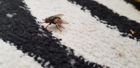 - (Insekten, Lebewesen)