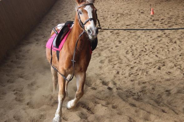 Wächst Die Mähne Bei Einem 22 Jährigem Pferd Wieder Nach Pferde