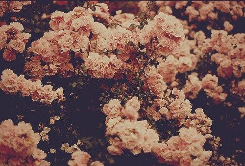 Vintage Floral Wallpapers - Full HD wallpaper search