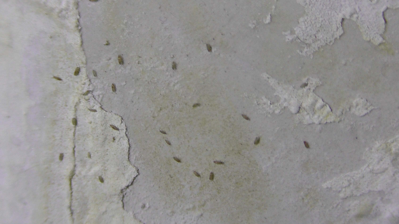 Wand feucht insektenbefall insekten schimmel - Wasserschaden wand ...