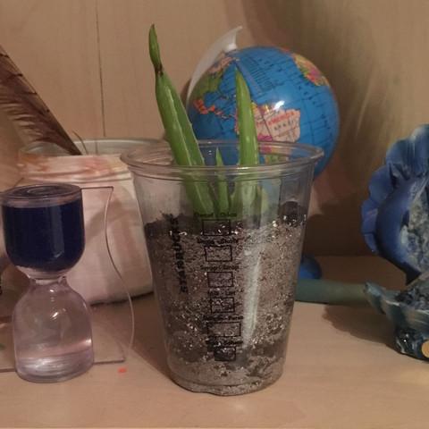 wann bildet mein aloe vera ableger wurzeln pflanzen. Black Bedroom Furniture Sets. Home Design Ideas