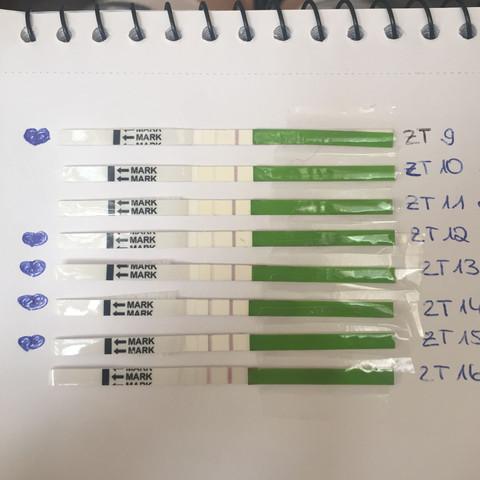 Ovulationtest - (Sex, Schwangerschaft, schwanger)