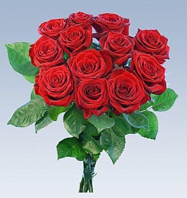 wann kommen die rosen zu lidl neu hilfe edeka. Black Bedroom Furniture Sets. Home Design Ideas