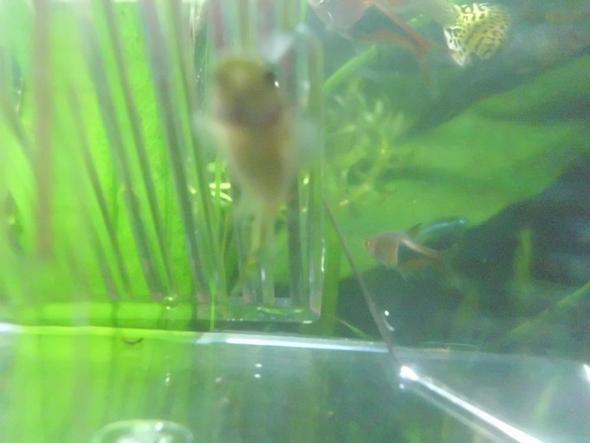 das ist es von unten:) - (Baby, Fische, Aquaristik)