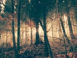 Wald - (Menschen, Tod)