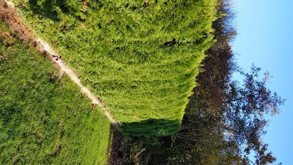 hecke - (Garten, Heckenschnitt)