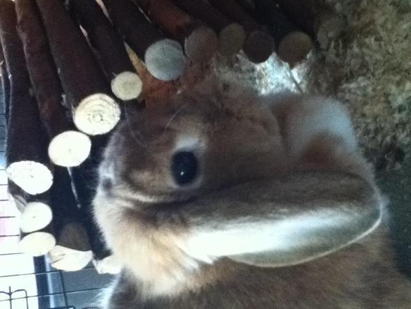 Lilli - (Kaninchen, vertragen)