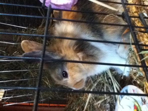 Timmy - (Kaninchen, vertragen)