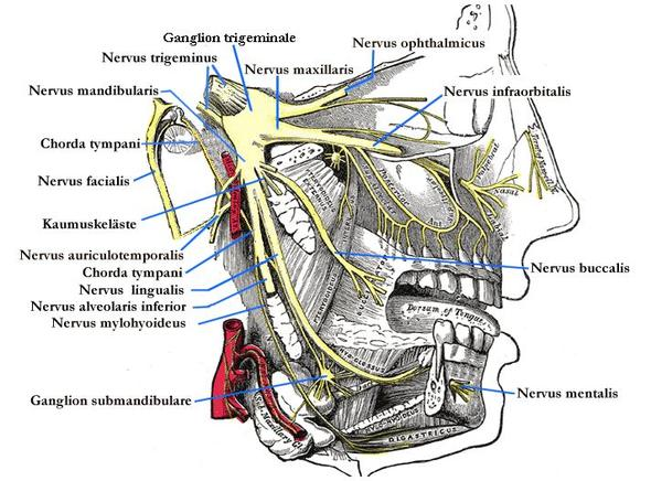 Wie Lange Hält Eine Betäubung Bei Zahnarzt An Gesundheit