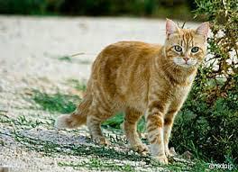1 Katze  - (Katzen, Namen, Warrior Cats)