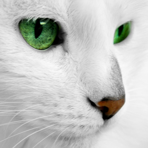 Gute Warrior Cats Namen