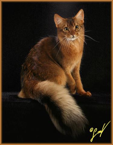 warrior cats name f r diese somali katze katzen katzennamen waca. Black Bedroom Furniture Sets. Home Design Ideas
