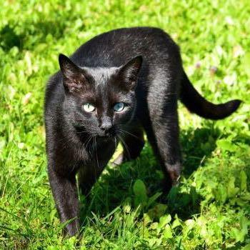 Warrior Cats Schwarzpfote