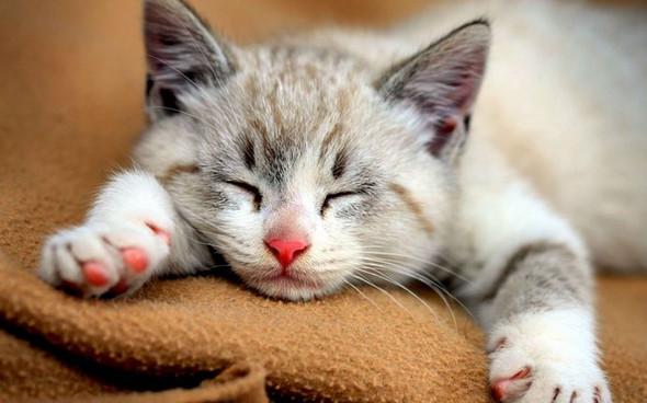 das ist die Weiß-graue - (Namen, Warrior Cats)