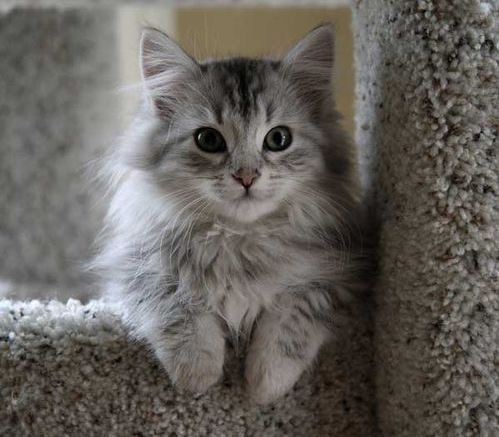 die Silberne - (Namen, Warrior Cats)