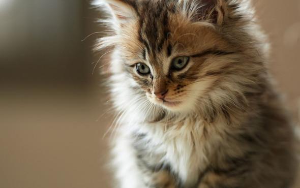 und die Braune - (Namen, Warrior Cats)