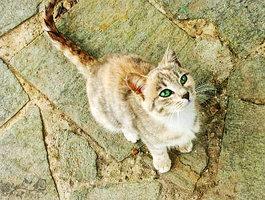 Bild1 - (Bilder, Katzen, Namen)
