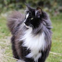 Bild3 - (Bilder, Katzen, Namen)
