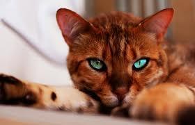 Bild4 - (Bilder, Katzen, Namen)