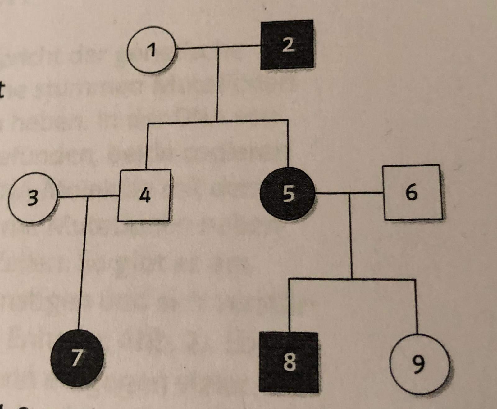 Warscheinlichkeit Stammbaum Vererbung Schule, Biologie