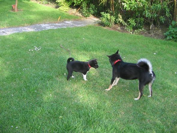 Hundewelpen - (Hund, Welpen, Hundefutter)