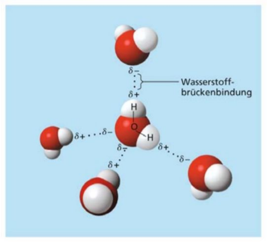 Warum bildet das Sauerstoffatom Bindungen zu zwei Wasserstoffatomen aus?