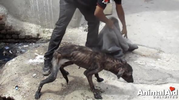 Warum fallen Hunden die Haare aus wenn sie auf der Straße leben?