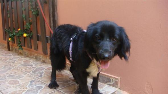 Borris - (Hund, verhalten-vom-hund)