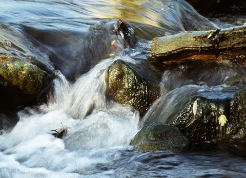 Wasser Bach - (Physik, Chemie, Biologie)